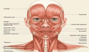 استخوان بندی چهره