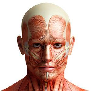 عضلات ابروئی